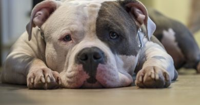 How Strong Is a Pit Bull