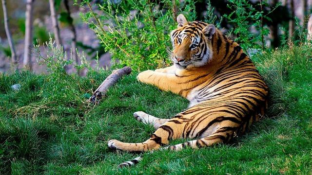 Tiger Names: 170 A-Z Terrific & Terrifying Names for A Tiger