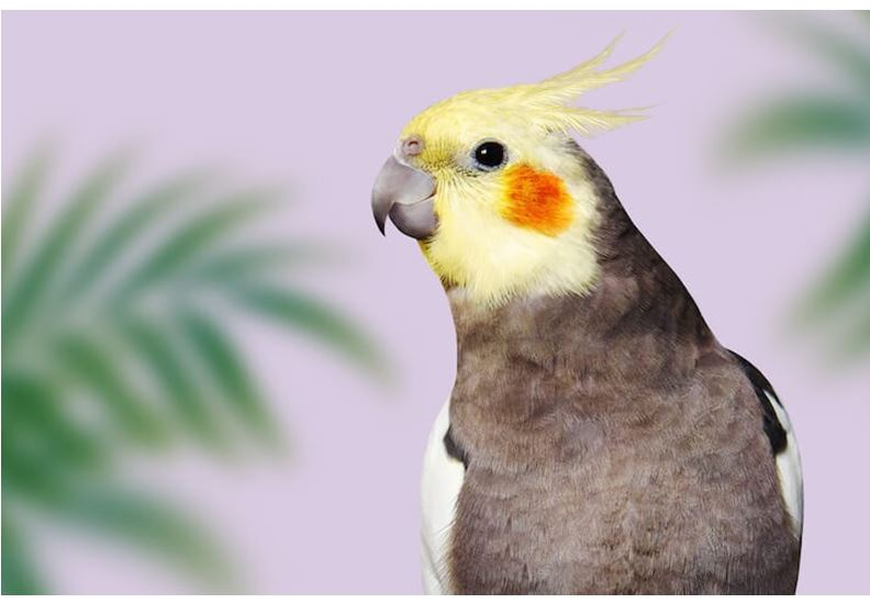 Funny birds name