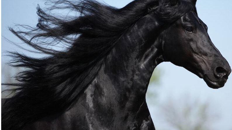 710+ Beautiful Names for A Black Horse: Black Horse Names