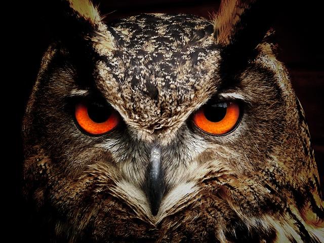 Owls are often super-silent