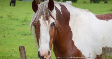 Male Horse Names: 201 Best Stud, Colt, Gelding & Stallion Names