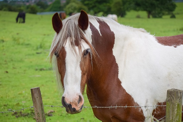 Male Horse Names: 201 Best Stud, Colt, Gelding & Stallion Names