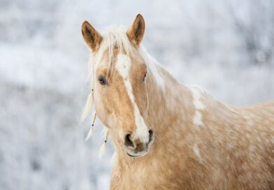 Horse Glue - Are Horses Killed To Make Glue 7 Facts You Should Know