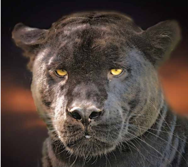 What Animals Have Yellow Eye